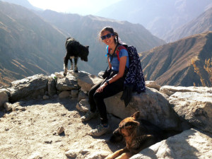 Hiking Colca Canyon dogs