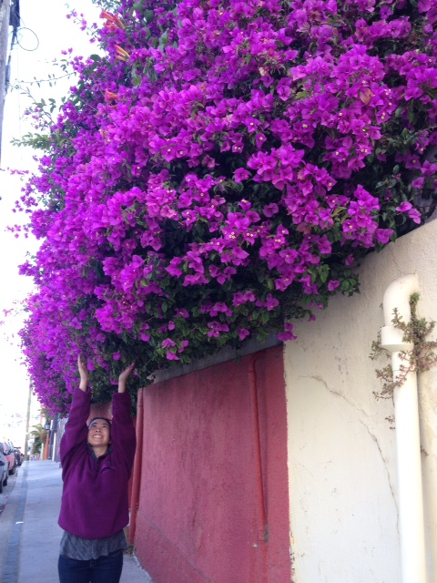 valparaiso flowers beautiful purple