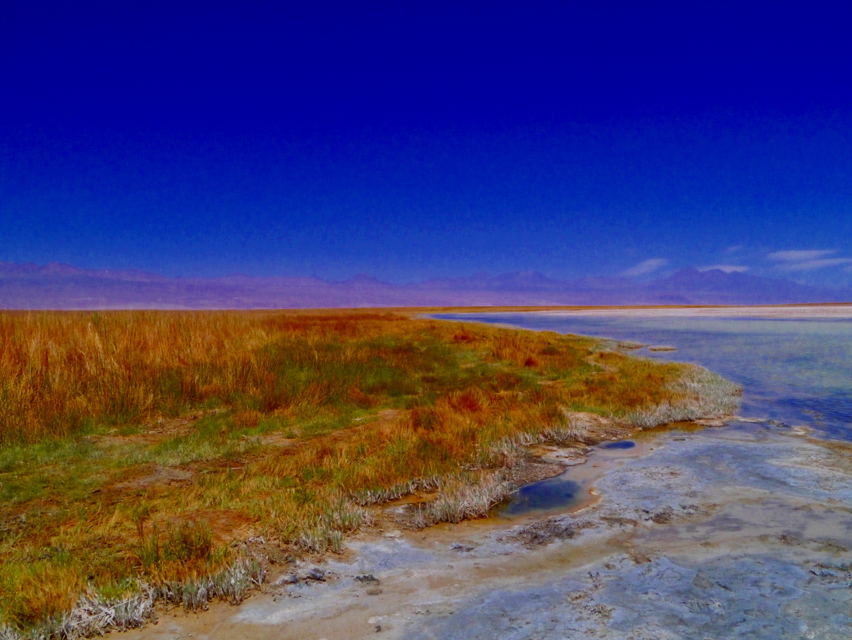 Laguna Cejar Chile Landscape