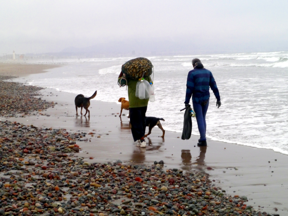 Mussle Hunting La Serena Beach Chile