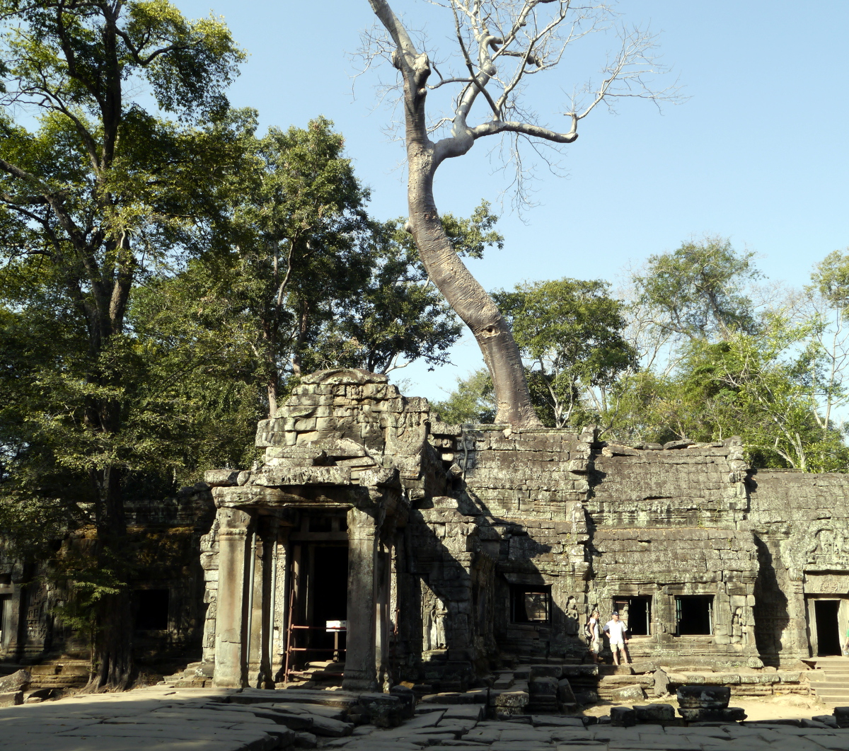 Ta Prohm Temple Huge Tree