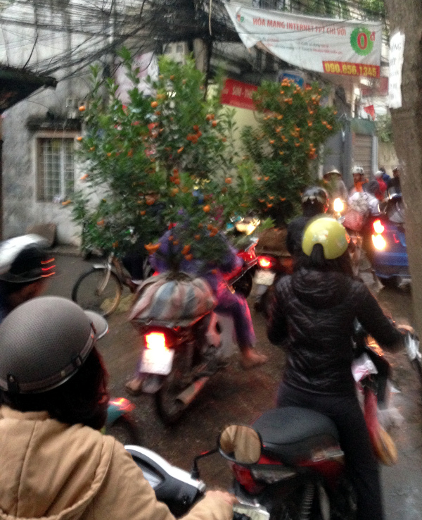 Chinese New Year Mandarin Tree Motorbike Hanoi